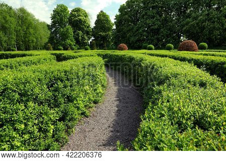 Beautiful View Of Green Hedge Maze On Sunny Day