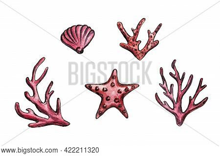 Hand Drawn Watercolor Illustration Of Corals, Starfish And Seashell