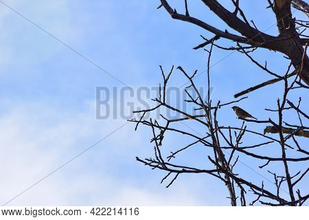 On The Right Side, A Bird Sits On Bare Branches Without Leaves. On The Left Side There Is An Empty S