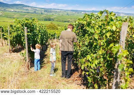 Winemaker, Wine Grower Or Grape Picker And Two Children With Ripe Blue Grapes On Grapevin. Man And S