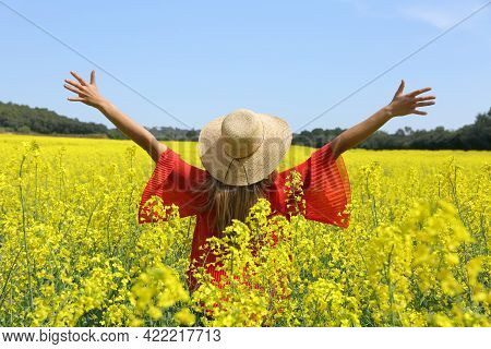 Back View Of An Excited Woman Outstretching Arms Celebrating Spring In A Field Of Yellow Flowers