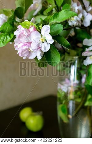 Flowering Branches Of An Apple Tree Are In A Glass Vase With Water. The Vase Is Defocused. Selective