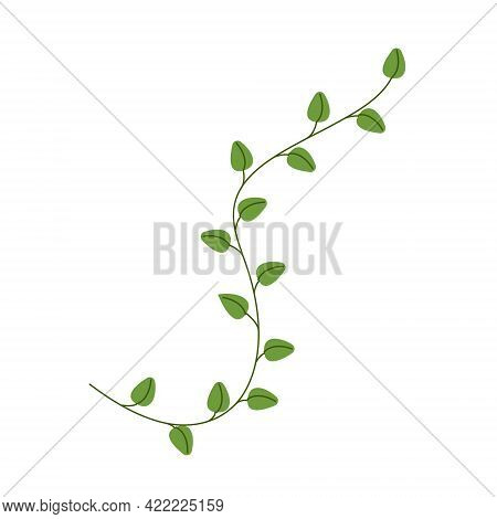 Sprig Of Oregano Herbs, Fragrant Herbs For Cooking, Vector Clipart In Flat Style, Isolate On White