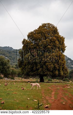 Beautiful View Of Large Tree Growing On Grassy Meadow