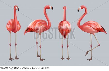 Realistic Flamingo. Exotic Tropical Birds Pink Color Animate Poses Wildlife Decent Vector Collection