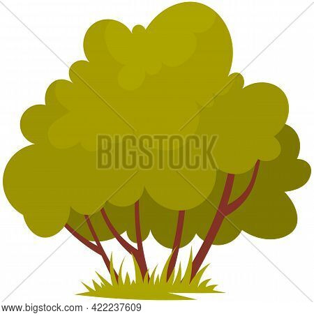 Small Bush. Green Shrub. Garden Plant With Long Branches. Nature Element Vector Illustration. Bloomi