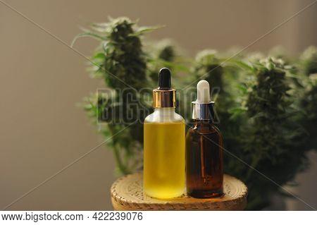 Marijuana Oil, Cbd Recreation. Cosmetic Bottle On Fresh Cannabis Shrub Background, Close-up. Home Re