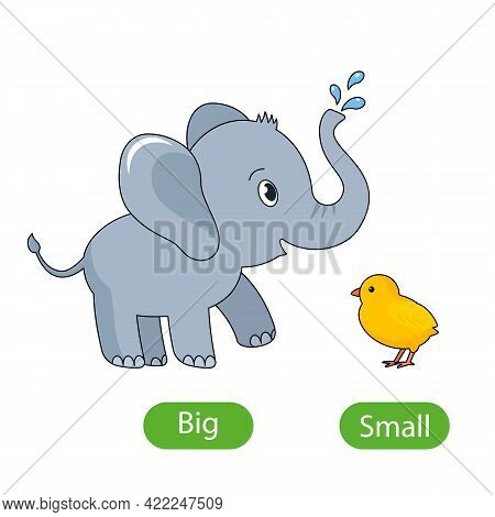 A Large Gray Elephant And A Small Chicken. The Concept Of Children's Learning Of Opposite Adjectives