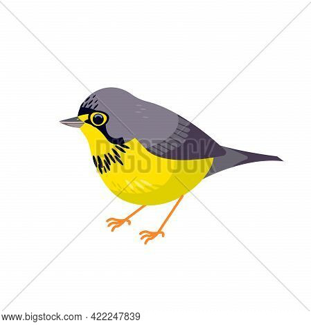 Canada Warbler Is A Small Boreal Songbird Of The New World Warbler Family Parulidae. Cartoon Flat St