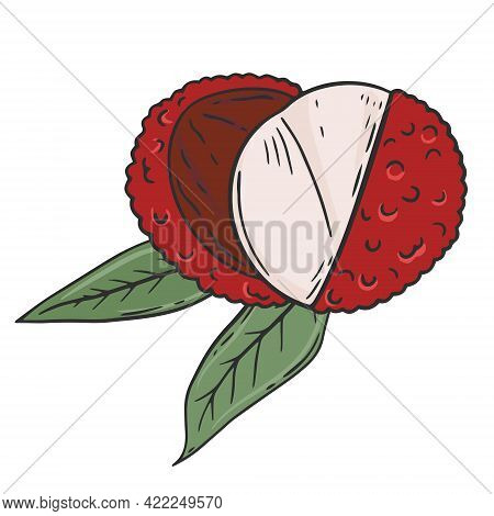 Lychee, Vector. Broken Lychee Fruits On A Background Of Leaves. Exotic Juicy Sweet Fruits. Hand Draw