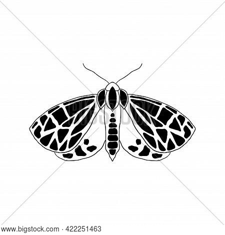Moth In Doodle Style Isolated On White Background..