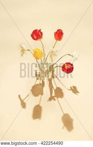 Beautiful Tulip And Daffodil Flowers In Glass Vases On Pastel Sunlit Background With Shadows. Nature