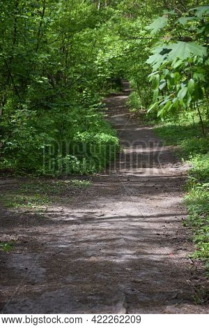 In A Summer Park Or Forest, There Is A Footpath Leading Into The Distance. The Path Winds Between Th