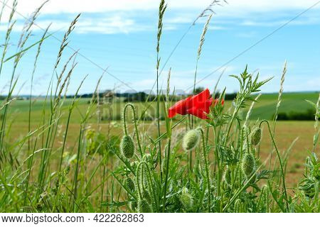 Focus On Red Poppy Flowers In The Foreground. Fields In Summer Blurred Deliberately In The Backgroun
