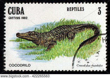 Cuba - Circa 1982: Cuban Postage Stamp Featuring Crocodylus Rhombifer In Grass. Cricodile On Postage
