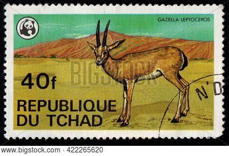 Chad - Circa 1982: Chad Postage Stamp Featuring Gazella Leptoceros. Antelope In Savannah On Postage
