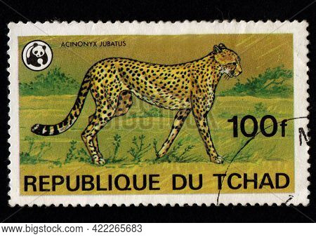 Chad - Circa 1982: African Cheetah Depicted On Postage Stamp. Chad Postage Stamp Featuring Cheetah.