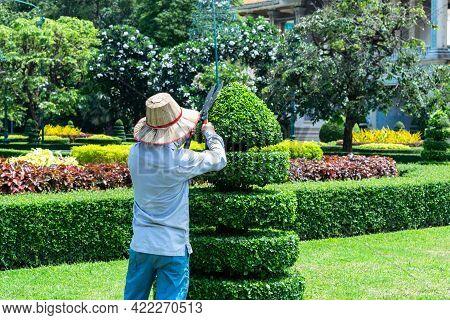 Senior Man Pruning Tree In Orchard. Gardening At Spring.