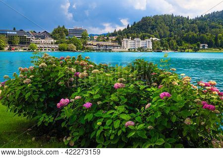 Hydrangea Flower Bushes On The Lake Shore. Hotels And Restaurants On The Waterfront, Lake Bled, Slov