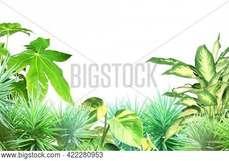 Frame with tropical plants leaves. Exotical border with plants of jungle and copy space for text. Isolated on white background. Mock up template