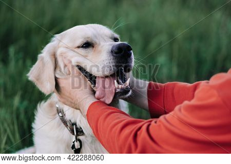 Young Man With A Golden Retriever For A Walk In A Summer Park. Male Hands Are Stroking A Joyful Dog