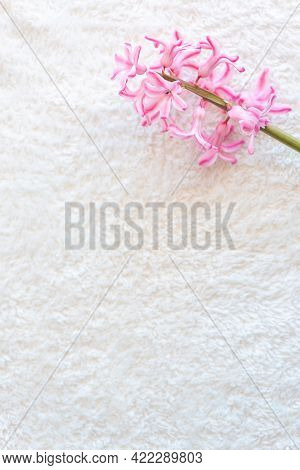 Cluster Of Fresh Light Pink Hyacinths Flowers On Green Stem Lies On White Fluffy Fabric Close Upper