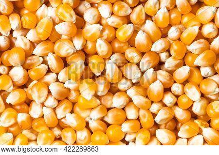 Food Background - Many Raw Maize Corns