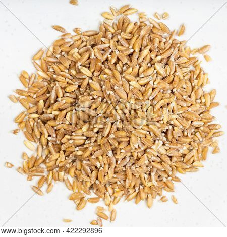 Top View Of Pile Of Emmer Farro Hulled Wheat Grains Close Up On Gray Ceramic Plate