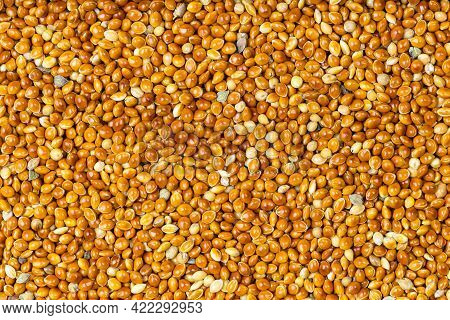 Food Background - Top View Of Unhulled Proso Millet Grains