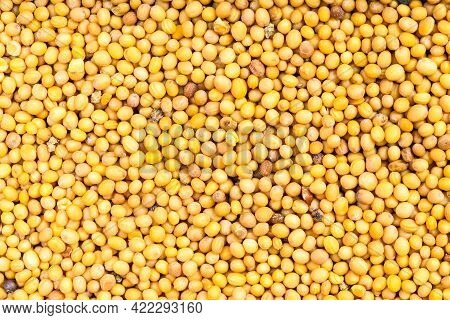 Food Background - Many Yellow Seeds Of Brassica Juncea Mustard
