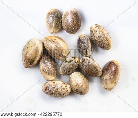 Several Unpeeled Hemp Seeds Close Up On Gray Ceramic Plate