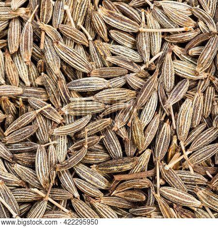 Square Food Background - Cumin (cuminum Cyminum) Seeds Close Up
