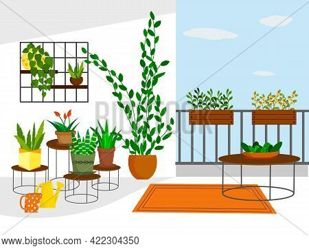 Garden On The Balcony With Flowers In Pots And On Shelves. Vector Illustration. For Use In Flower Sh