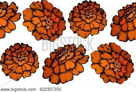 Seamless Pattern With Colorful Botanical Sketch Of Marigold Flowers On White Background. Vector Text