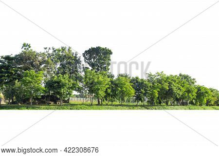 View Of A High Definition Treeline Isolated On A White Background, Green Trees, Forest And Foliage I