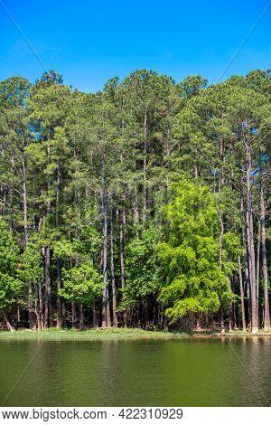 Lake shoreline with beautiful forest woodland in North Carolina