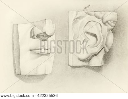 Realistic Pencil Sketch Of A Human Plaster Of Paris Ear, Hair And Lips. Educational Graphic Black-wh