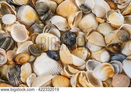 Summer Background Pattern From Seashells. Shell Close-up. Ocean Coast. Seashells Background.