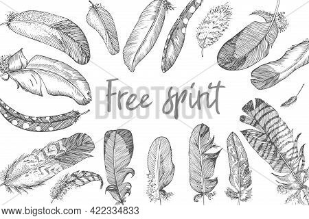 Realistic Sketch Of Bird Feather On Isolated Background. Rectangular Banner. Detailed Ink Line Pen C