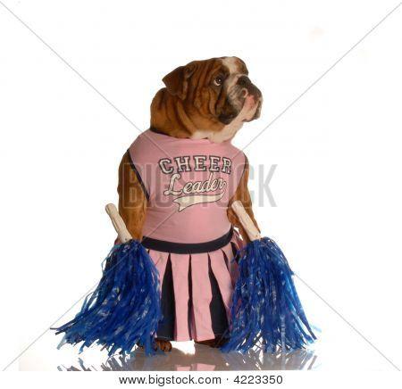Bulldog Cheerleader