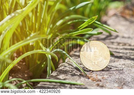 Close-up Of Bitcoin On Concrete Outdoor With Green Grass Natural Background. Single Gold Btc Cryptoc