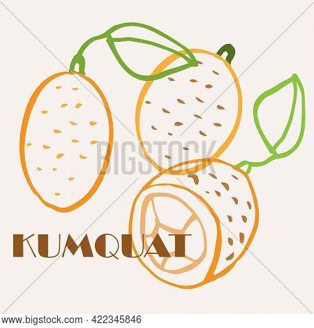 Kumquat Line Art Hand-drawn Multicolor Modern Vector Illustration. Colorful Line Art Exotic Fruit De