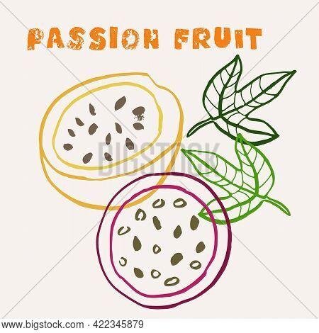 Passion Fruit Line Art Hand-drawn Multicolor Modern Vector Illustration. Colorful Line Art Exotic Fr