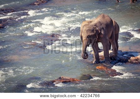 Two Elephants Standing On Small Rock While Bathing