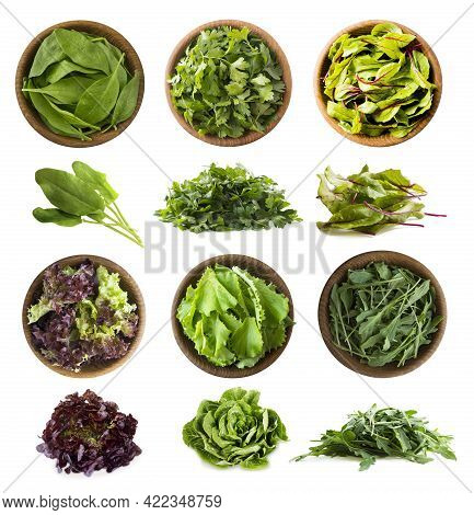 Leafy Vegetables Isolated On White. Spinach Leaves, Parsley, Swiss Chard (mangold Or Beet Leafs), Le