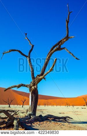 The bottom of dry dead lake Sussussflay. Clay plateau in the part of the Namib Sossusvlei desert.  Grand trip to Namib Naukluft desert. The concept of exotic, extreme and photo tourism