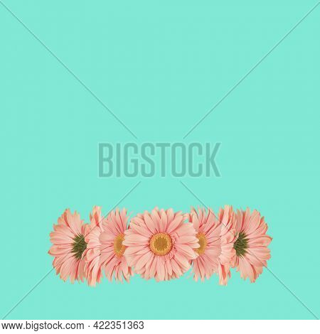 Gerbera flowers daisies on bright green square background. Trendy minimal abstract concept. Trendy creative art on modern vivid color