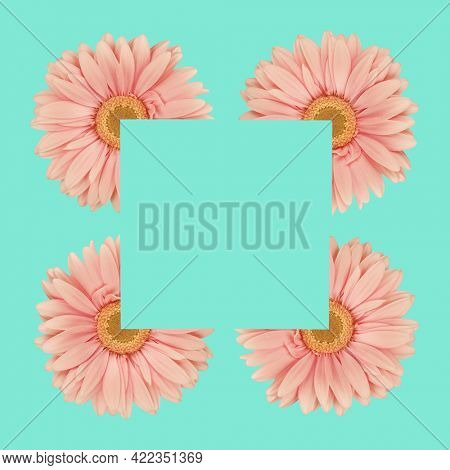 Four gerbera flowers daisies making square frame on bright green square background. Trendy minimal abstract concept. Creative art on modern vivid color