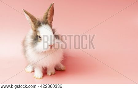 Easter Animal Bunny Concept. Adorable Rabbit Brown And White Standing On Isolated Pink Background. L