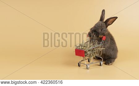 Adorable Furry Bunny Pushing Shopping Cart With Dry Timothy While Standing Over Isolated Pastel Oran